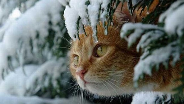Синоптик рассказала, когда в Украине потеплеет